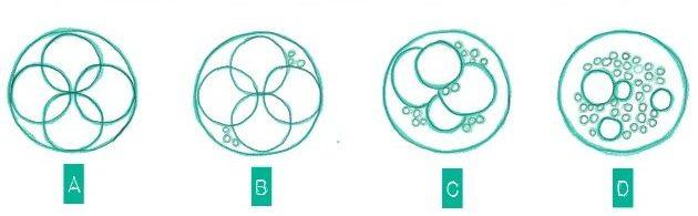 Das Bild zeigt einen Vierzeller an Tag 2 in verschiedenen Qualitäten
